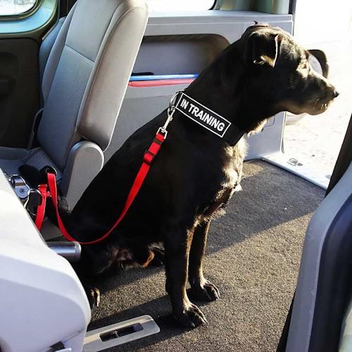 laisse de s curit pour chien voyage en voiture l24. Black Bedroom Furniture Sets. Home Design Ideas