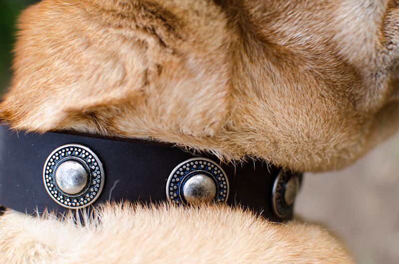 collier original en cuir pour chien sharpei c73. Black Bedroom Furniture Sets. Home Design Ideas