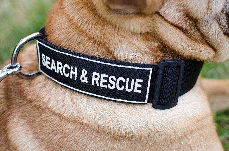 collier pour chien large