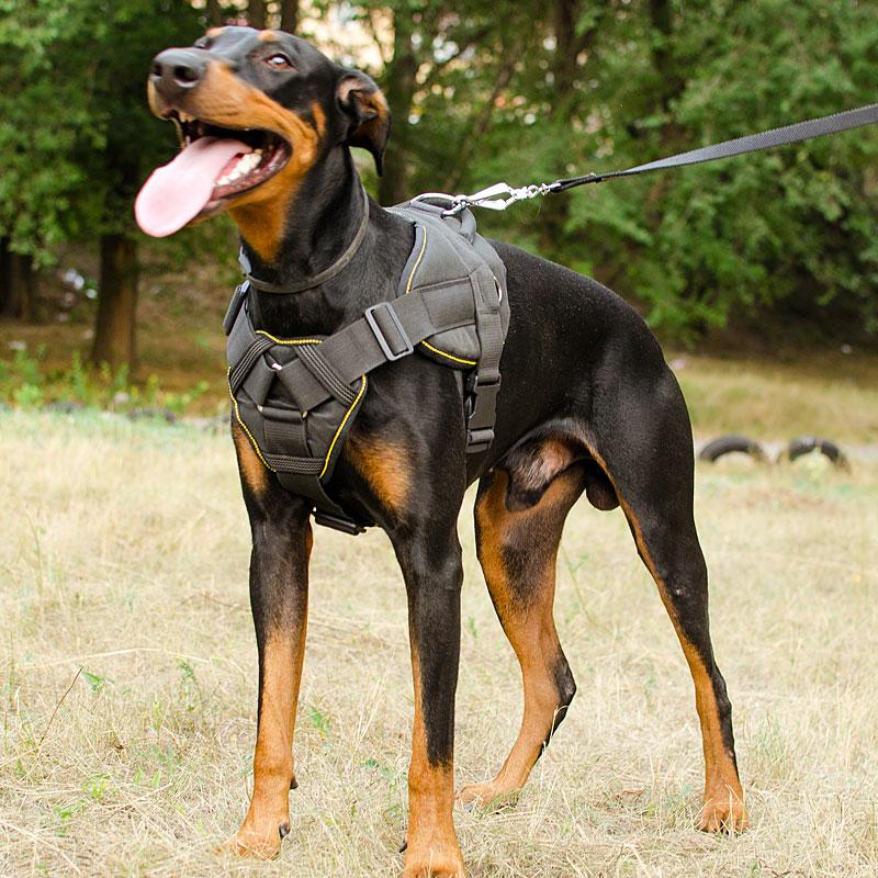 harnais universel pour chien dobermann force de traction h12. Black Bedroom Furniture Sets. Home Design Ideas