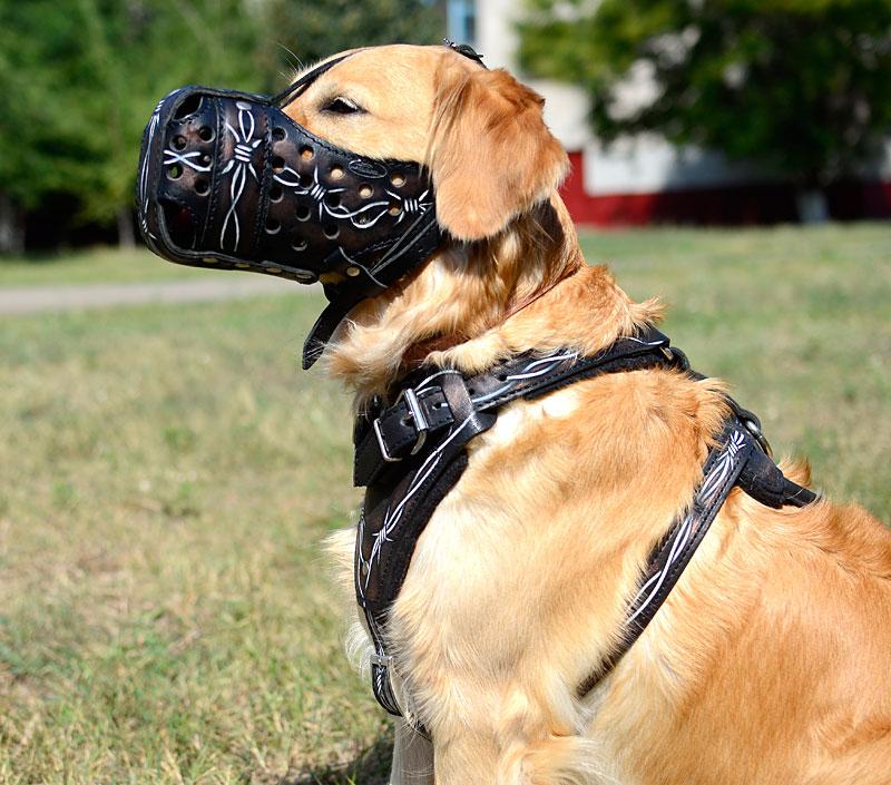 Chien Peint muselière en cuir peint pour chien golden retriever - m77bw